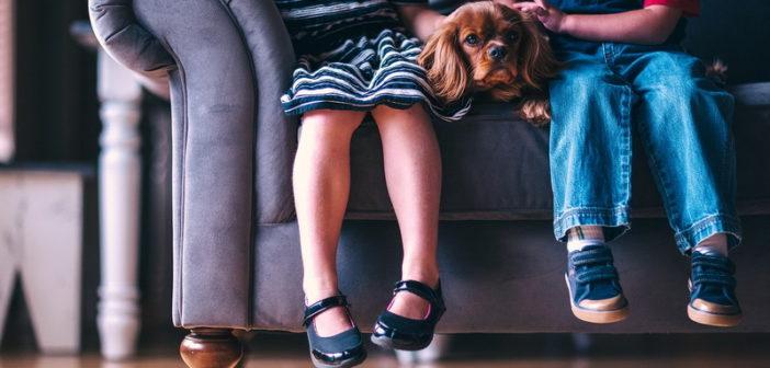 Изображение - Как выделить доли детям после выплаты ипотеки adorable-1866531_1280-702x336